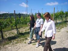 tour degustación vinos Toscana